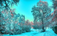 nature,landscapes landscapes nature winter trees hdr photography 2560x1600 wallpaper – nature,landscapes landscapes nature winter trees hdr photography 2560x1600 wallpaper – Photography Wallpaper – Desktop Wallpaper