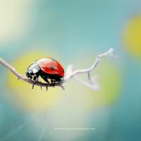 Photography Gallery 024 « Tutorialstorage | Photoshop tutorials and Graphic Design