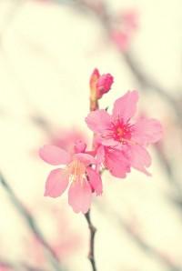DSC_6663 | Flickr – ?????