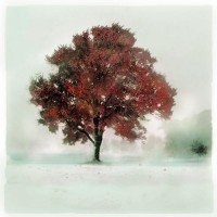 Winter greets autumn 10x10 Original signed by dahliahousestudios