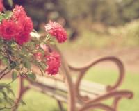 i ? flowers