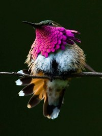 The Humming Bird - Imgur
