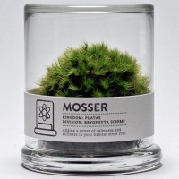 Mosser Moss Terrarium | Fancy Crave