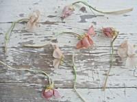 fleurs+008.jpg (800×600)