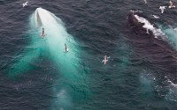 white-whale-willow.jpg (JPEG Image, 800 × 500 pixels)