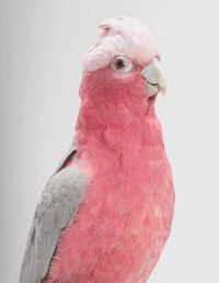 Pink Parrot???? ? We Heart It / ???????? ??? ???????? ? 55664493