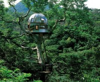 tree-house.jpg (image)