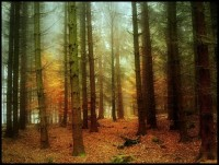 Beautiful Forest Photography by Bernd Rettig / Nature photography / Photography Hubs and Blogs