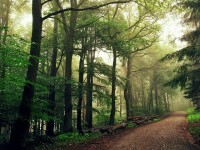 Beautiful Forest Photography by Bernd Rettig / Nature photography / Photography Hubs and Blogs