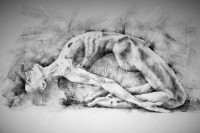 Beautiful Yoga Pose Woman Charcoal Drawing - Drawing Classical Art - 54ka StockPhoto