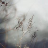 TrendsNow | Herbaria