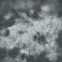 Herbaria herbaria-07 – TrendsNow