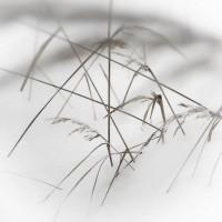 Herbaria herbaria-09 – TrendsNow