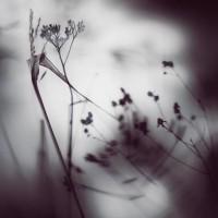 Herbaria herbaria-11 – TrendsNow