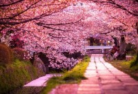 Spring Around the World: 25 Fascinating Cherry Blossom Photos | inspirationfeed.com