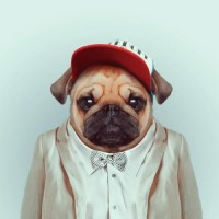 Awesome Zoo Portraits Serie by Yago Partal - Smashfreakz