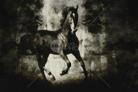 Galloping Horse on Dark Backround Texture - Animals Photography - 54ka StockPhoto