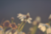10 Beautiful Collection of Blurred Backgrounds - Freebie No: 58