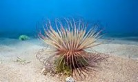 deep sea plant - Bing Images