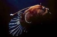 deep sea plant - Bing Images