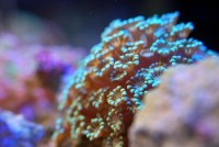 Coral ?? Acuario   Flickr - Photo Sharing!