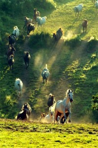 Horses Wildlife Photography   A1 Pictures