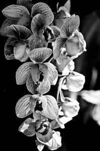 Orchid Noir Art Print by Ann B. | Society6