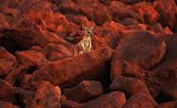 A-kangaroo-stands-among-i-011.jpg (JPEG Image, 760×462 pixels)
