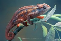40 Lovely Examples of Macro Photography   inspirationfeed.com