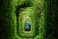 secret-train-tunnel-of-love-in-ukraine-5.jpeg (JPEG Image, 728 × 486 pixels)