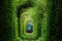 secret-train-tunnel-of-love-in-ukraine-5.jpeg (JPEG Image, 728×486 pixels)