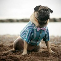 (99+) Fab.com | Sophisticated Pet Fashion
