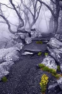 New Wonderful Photos: Into the Mystic, Appalachian Trail, Virginia