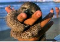 Pygmy Three-Toed Sloths…… | Zoo Peeps (Home of Zoo Talkin' Radio)