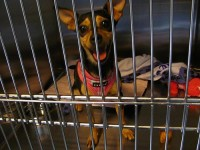 Boarding Your Dog | Go-Go Dog Pals Blog