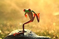 let`s dance frog photo