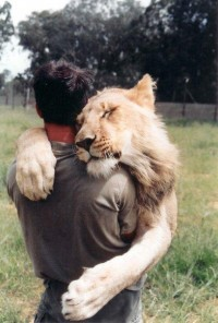 The Lion Whisperer | Kevin Richardson - Czytaj, nie pytaj! - Style, trendy, inspiracje, pomys?y, nowo?ci obejmuj?ce takie gatunki jak moda