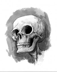 skull sketch by ~alanrobinson