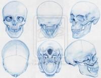 Anatomy: Skull by ~YukeraYasha