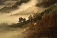 1X - November's fog by Bor