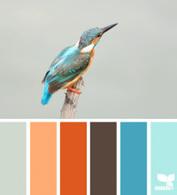 Design Seeds® | for all who ? color | kingfisher hues