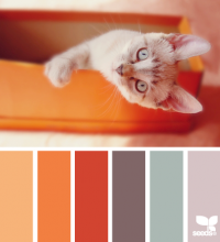 Design Seeds® | for all who ? color | kitten hues