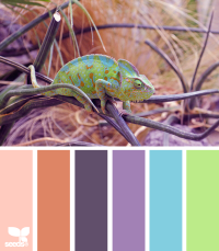 Design Seeds® | for all who ? color | color chameleon