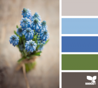Design Seeds® | for all who ? color | flora hues