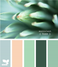 Design Seeds® | for all who ? color | succulent hues