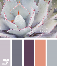 Design Seeds® | for all who ? color | succulent tones