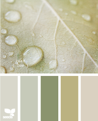 Design Seeds® | for all who ? color | leaf dew