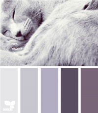 Design Seeds® | for all who ? color | cat nap