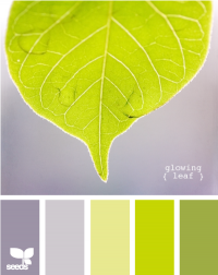 Design Seeds® | for all who ? color | glowing leaf
