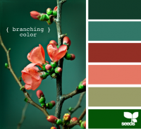 Design Seeds® | for all who ? color | branching color